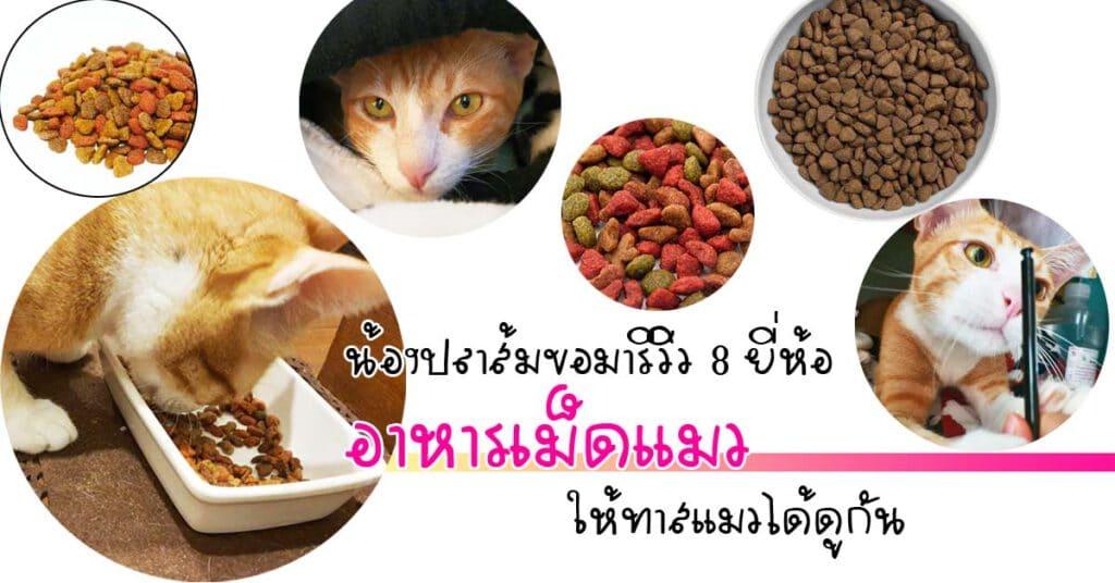"""+ """"อาหารเม็ดแมว"""" ยี่ห้อไหนดี 2021 รวมมาแล้ว รีวิว 9 ยี่ห้อ +"""