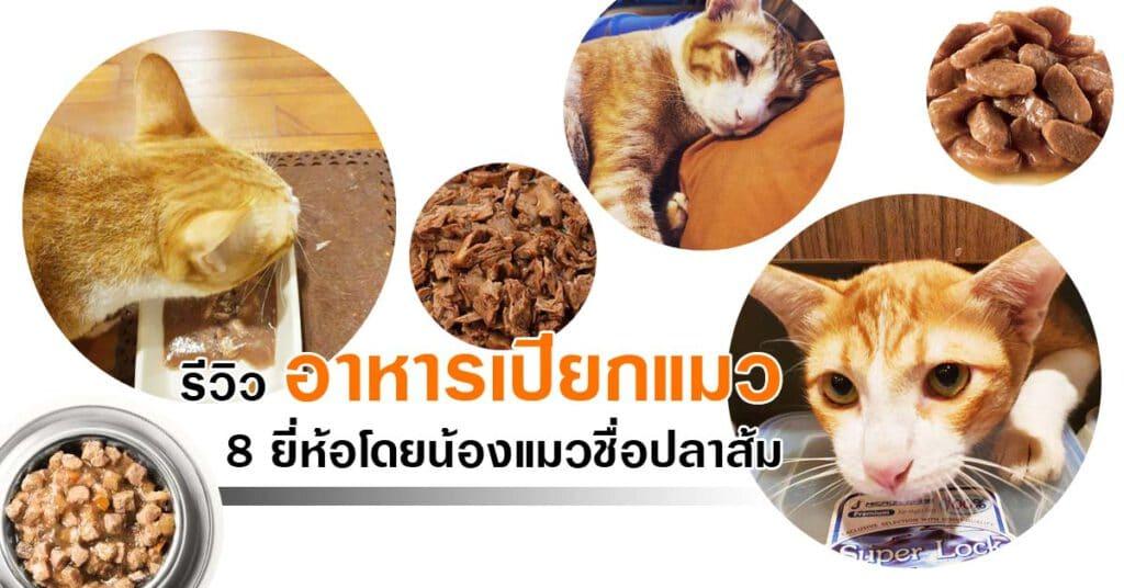 """+ """"อาหารเปียกแมว"""" ยี่ห้อไหนดี 2020 รวมมาแล้ว รีวิว 8 ยี่ห้อ +"""