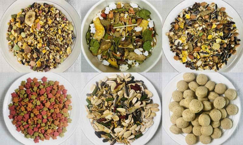 อาหารหนูแฮมเตอร์ หลากหลายรูปแบบ