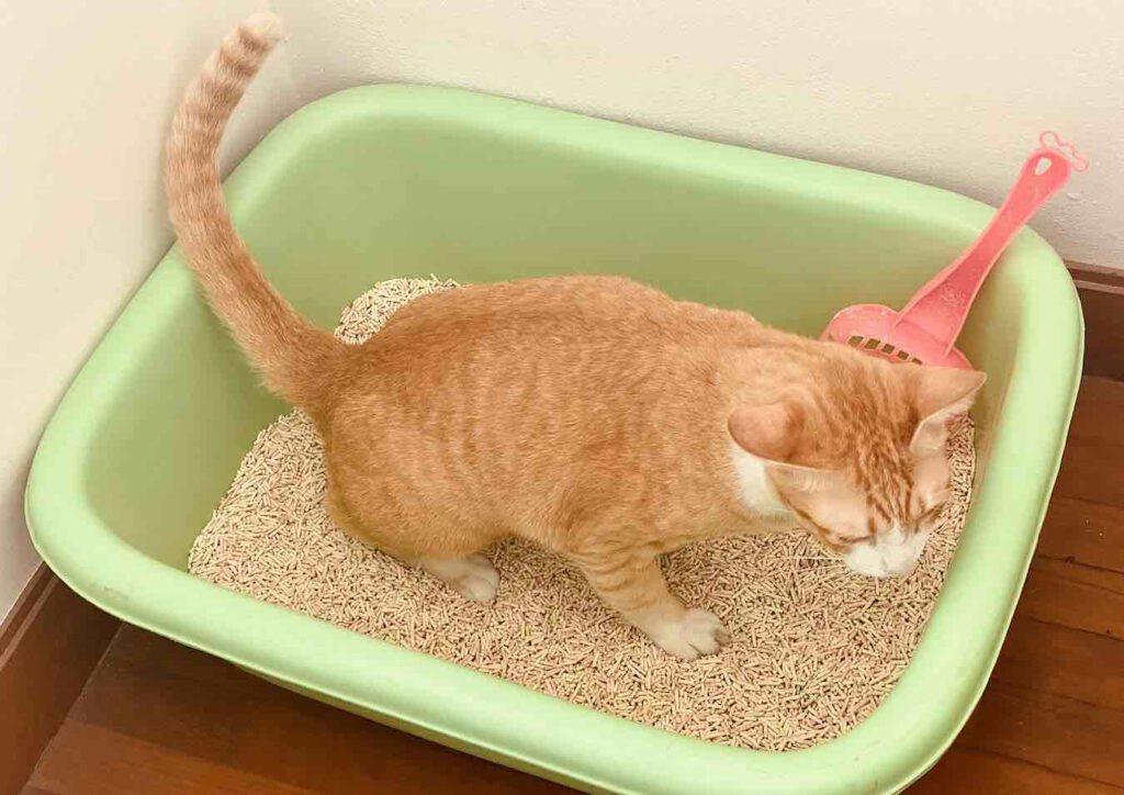 ปริมาณของทรายแมว
