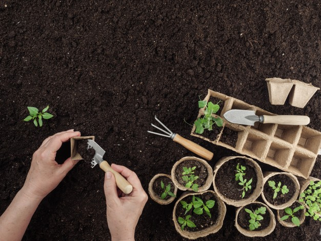เกษตร ทูเดย์ มิติใหม่แห่งตลาดการค้าสินค้าเพื่อการเกษตรออนไลน์