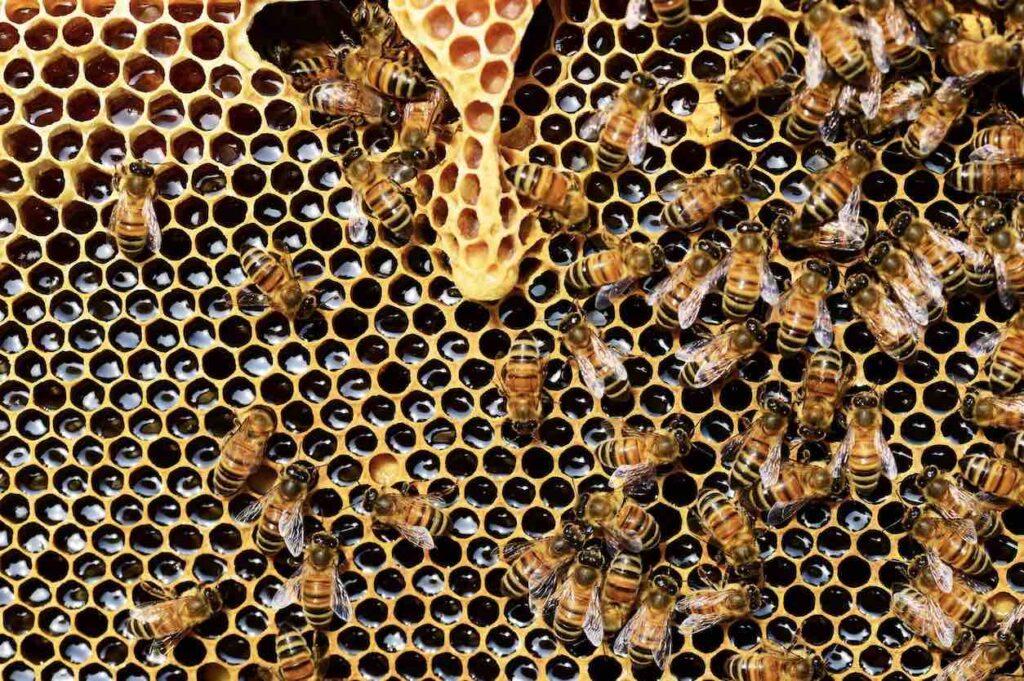 3. อาหารเสริมบำรุงผิวชุ่มชื้น นมผึ้ง (Royal Jelly)